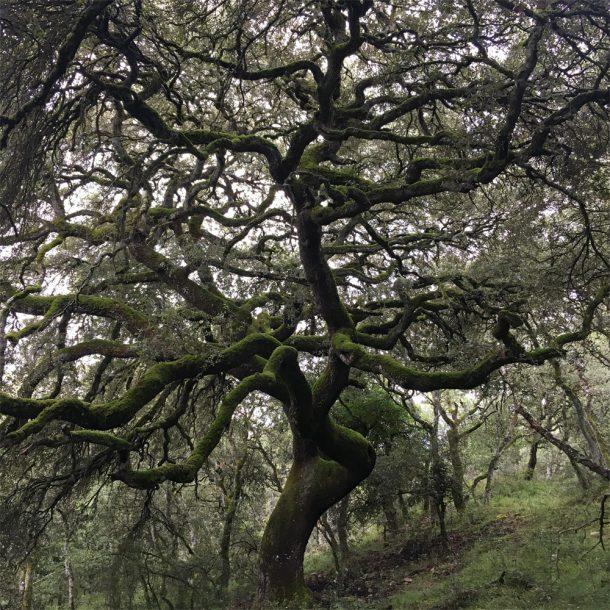 Bosque de Olza